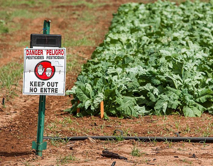 culturi agricole cu pesticide